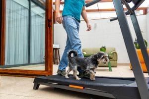 man walking on a treadmill with his dog